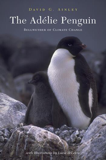 The Adélie Penguin